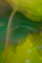 LENS_CREATION;ABSTRACT;LEAVES;VERTICAL
