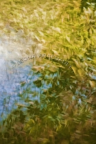 IMPRESSIONISTIC;LENS_CREATION;DIGITAL_ART;ABSTRACT;LEAVES;FALL;WATER;VERTICAL