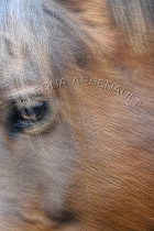 IMPRESSIONISTIC;LENS_CREATION;HORSES;ABSTRACT;VERTICAL