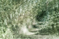 IMPRESSIONISTIC;LENS_CREATION;FOREST;ABSTRACT;HORIZONTAL