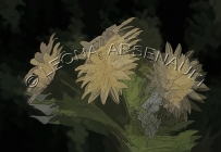 IMPRESSIONISTIC;LENS_CREATION;FLOWERS;YELLOW;ABSTRACT;HORIZONTAL