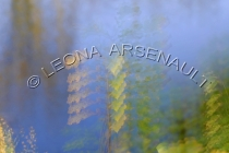 IMPRESSIONISTIC;LENS_CREATION;ABSTRACT;WATER;LEAVES;FALL;HORIZONTAL