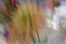 IMPRESSIONISTIC;LENS_CREATION;ABSTRACT;VASES;FLOWERS;HORIZONTAL