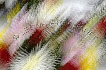 IMPRESSIONISTIC;LENS_CREATION;ABSTRACT;FLOWERS;HORIZONTAL
