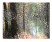 IMPRESSIONISTIC;LENS_CREATION;ABSTRACT;FOREST;TREES;HORIZONTAL