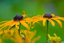 LAZY_SUSANS;YELLOW;FLOWERS;HORIZONTAL