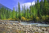 CANADA;ALBERTA;ICEFIELD_PARKWAY;CANADIAN_ROCKIES;ROCKY_MOUNTAINS;WATER;FALL;ROCK