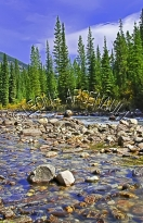 CANADA;ALBERTA;ICEFIELD_PARKWAY;CANADIAN_ROCKIES;ROCKY_MOUNTAINS;WATER;FALL;STRE