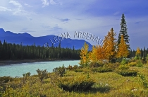 CANADA;ALBERTA;ICEFIELD_PARKWAY;CANADIAN_ROCKIES;ROCKY_MOUNTAINS;WATER;FALL;FALL