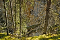 CANADA;ALBERTA;BANFF_NATIONAL_PARK;JOHNSTON_CANYON;FOREST;TREES;LIMESTONE;HORIZO