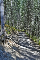 CANADA;ALBERTA;BANFF_NATIONAL_PARK;JOHNSTON_CANYON;ROCKS;PATH;FOREST;TREES;LANDS