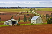 CANADA;PRINCE_EDWARD_ISLAND;QUEENS_COUNTY;SUMMERFIELD;GRAIN_FIELDS;FIELDS;PASTUR