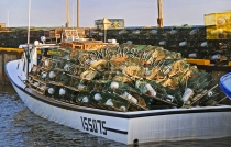 CANADA;PRINCE_EDWARD_ISLAND;PRINCE_COUNTY;LOBSTER_BOATS;BOATS;LOBSTER_TRAPS;TRAP